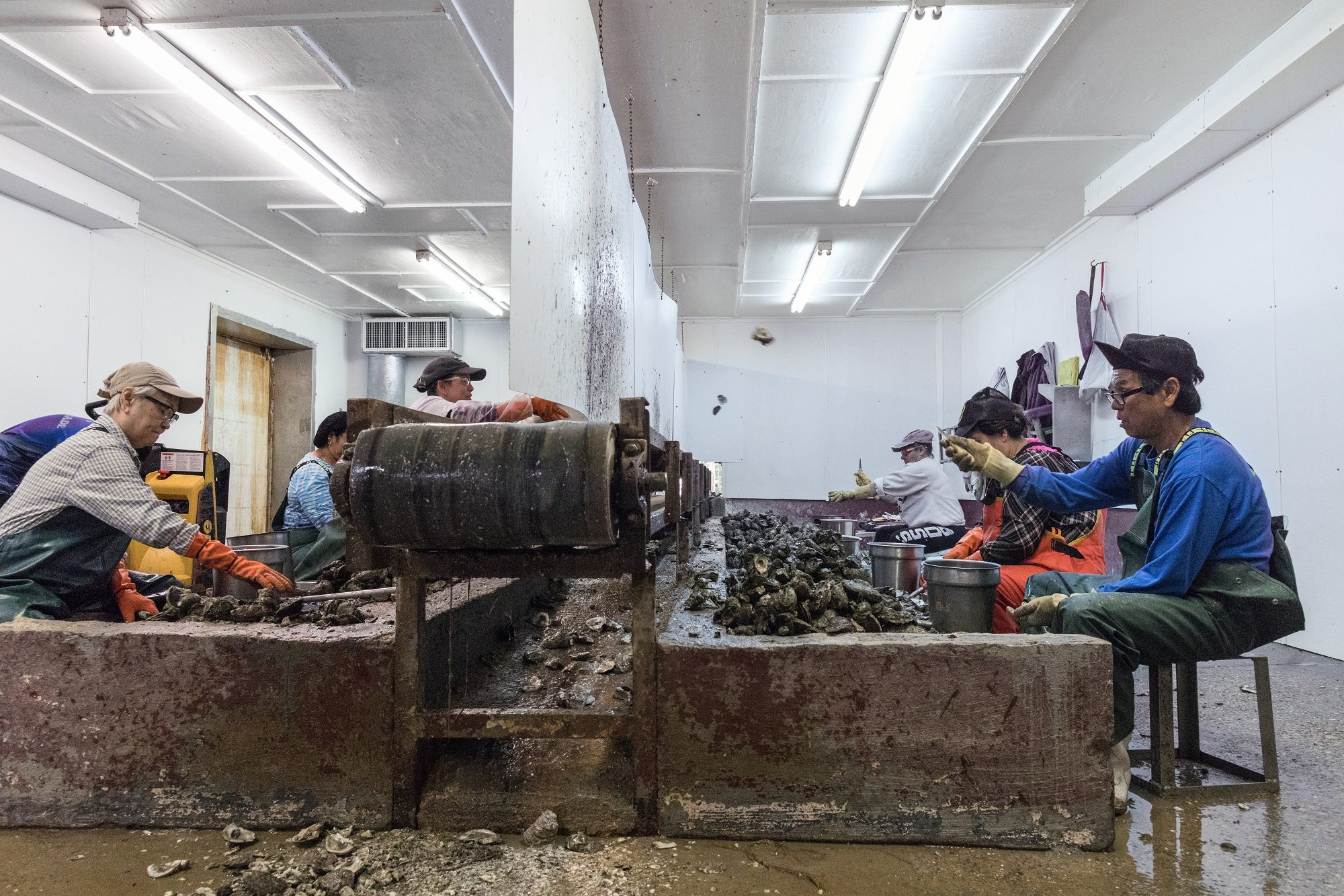 Today, 20% of Bayou la Batre's residents are originally from Vietnam, Laos and Cambodia. These Indochinese refugees worked in the fishing industries back home, but now they work at Travis Stringfellow's Crimson Bay Seafood Company.
