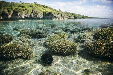 Underwater landscape at Beveridge Reef, Niue.