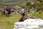 Distribution of food and cash Lesotho