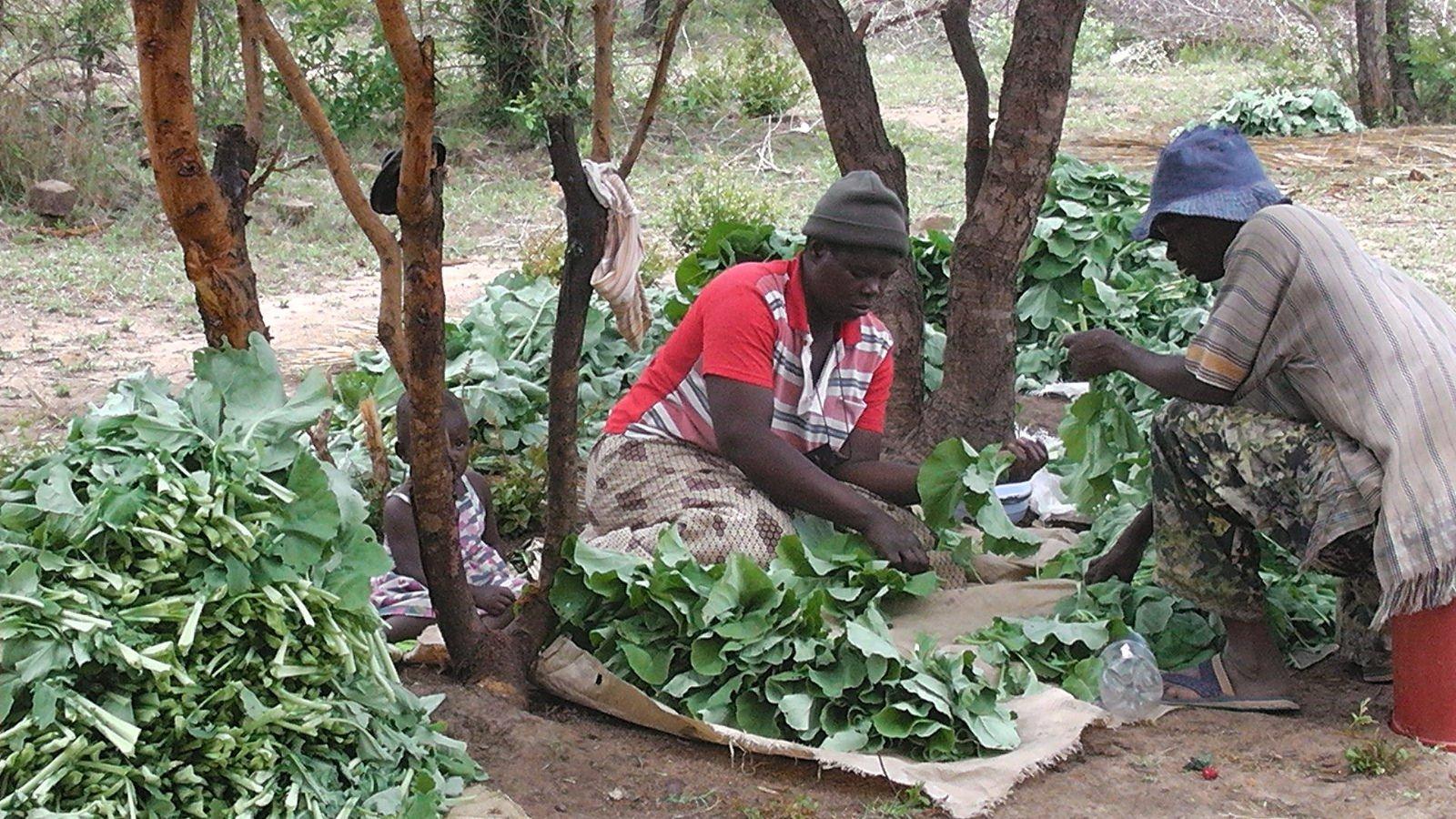 Grading vegetables for market, Zimbabwe, 2012. Photo: Pascal Manyakaidze (CC BY 2.0)