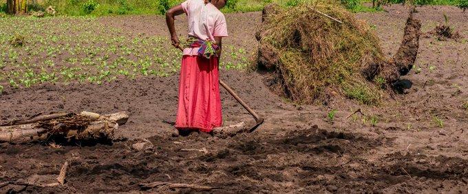 A woman prepares garden soil for planting vegetables in rural Uganda, 2014.