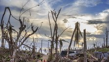 Samar Island, Guiuan. Moments before sunset, a desolate landscape of destroyed coconut trees outside the centre of town.