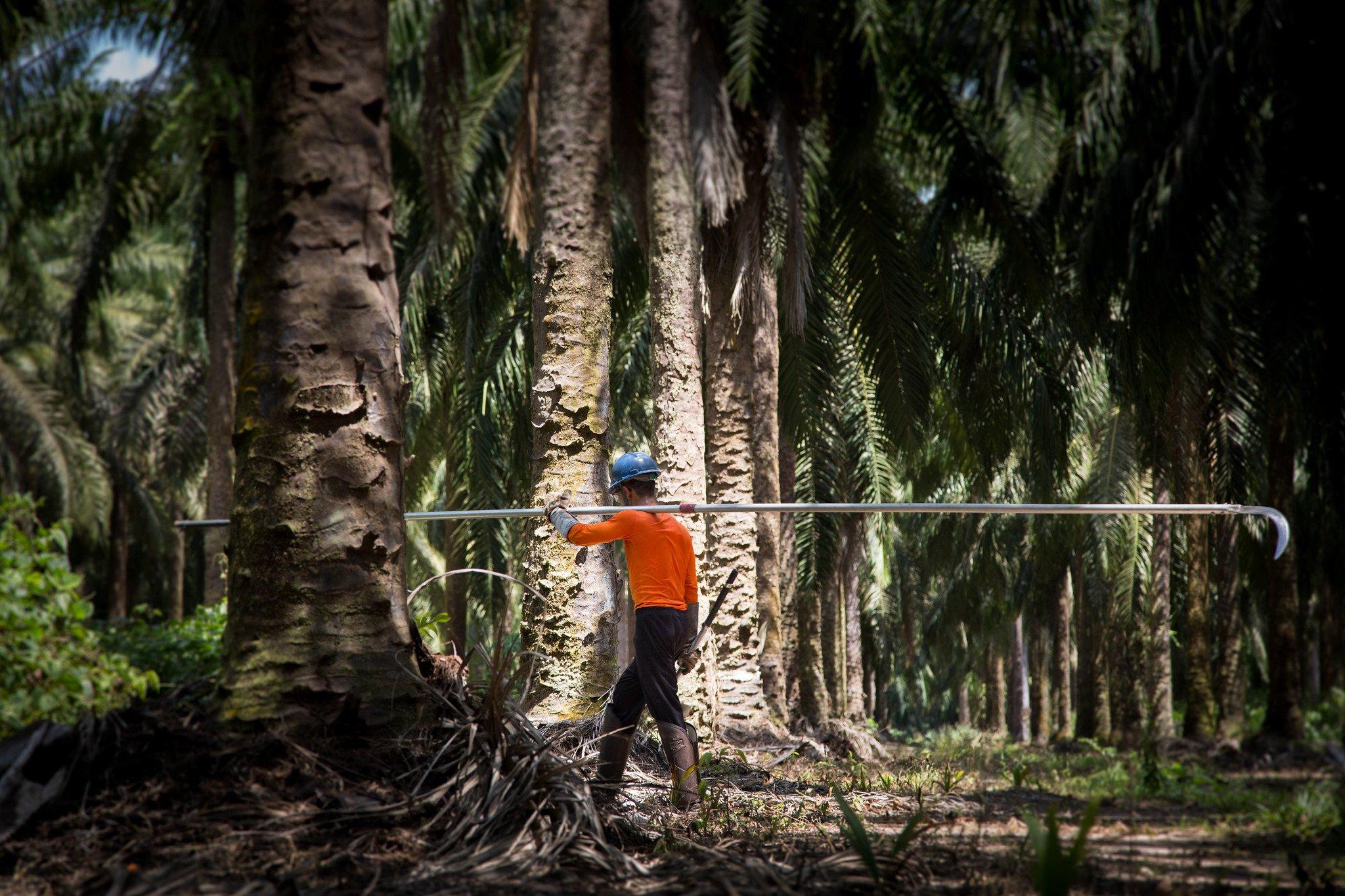 Palm oil factory worker, Brazil